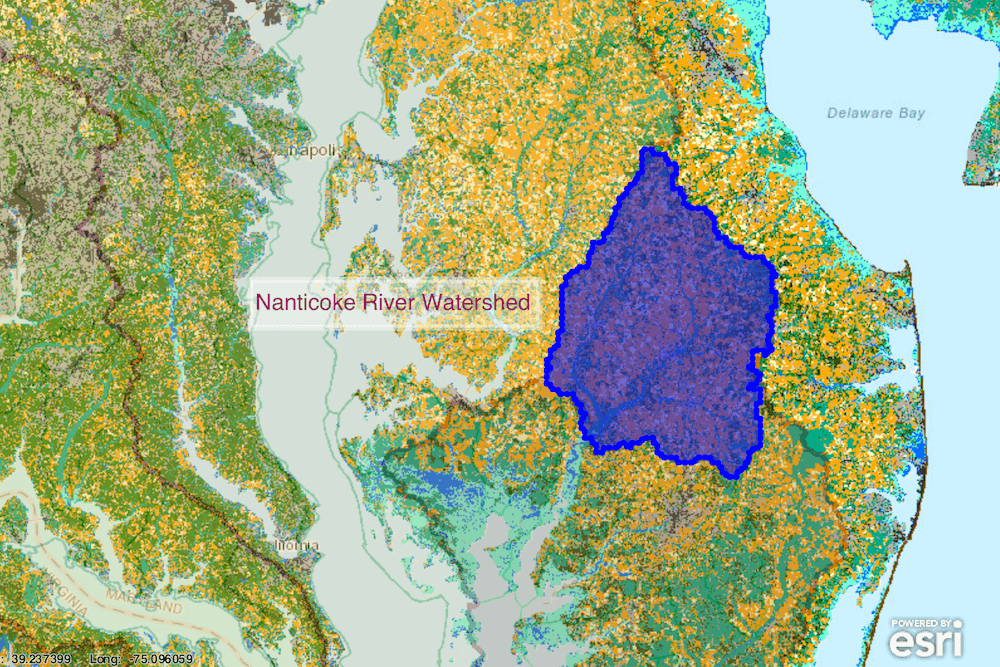 A map of the Chesapeake Bay estuary with the Nanticoke River highlighted in blue.